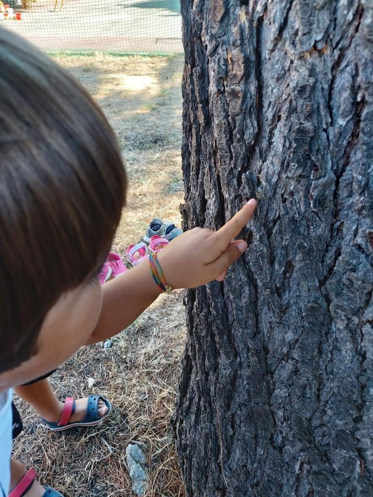 la corteccia 768x1024 - APERTURA Nido & Casa dei Bambini 7 settembre